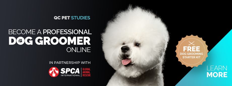 QC Pet Studies in partnership with SPCA International